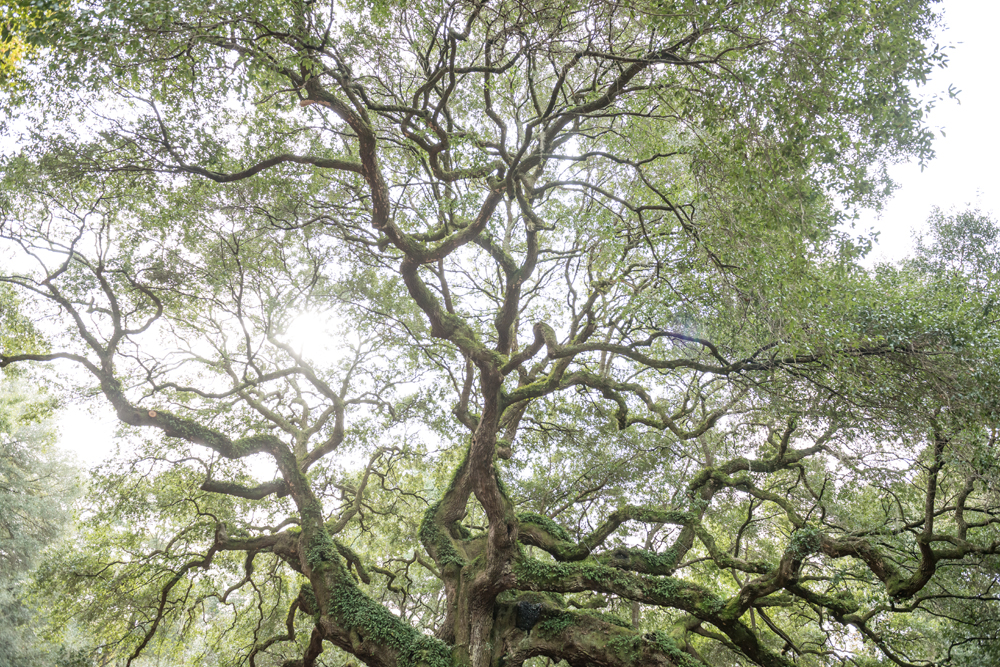 039-054-Charleston_Angel_Oak-2817
